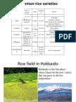 Common Rice Varieties