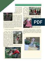 Our Organic Garden at Novato Charter School