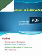 Gene Expression in Eukaryotes