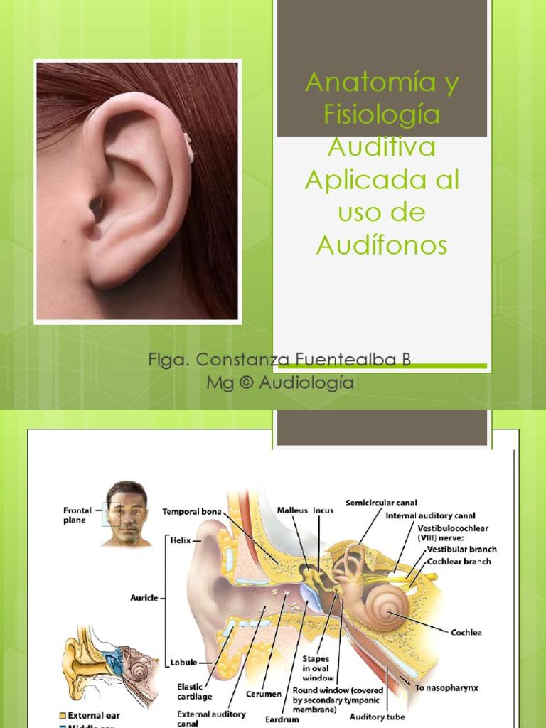 Perfecto Anatomía Y Fisiología Aplicada A La Patología Del Habla Y ...