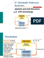 22 CH106 Metabolic Paths for Carbohydrates Timberlake 2nd