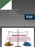 Diapositivas - Copia