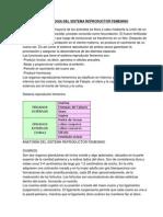 Anatomia y Fisiologia Del Sistema Reproductor Femenino