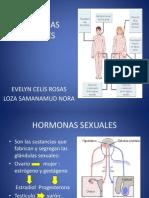 hormas_sexuales