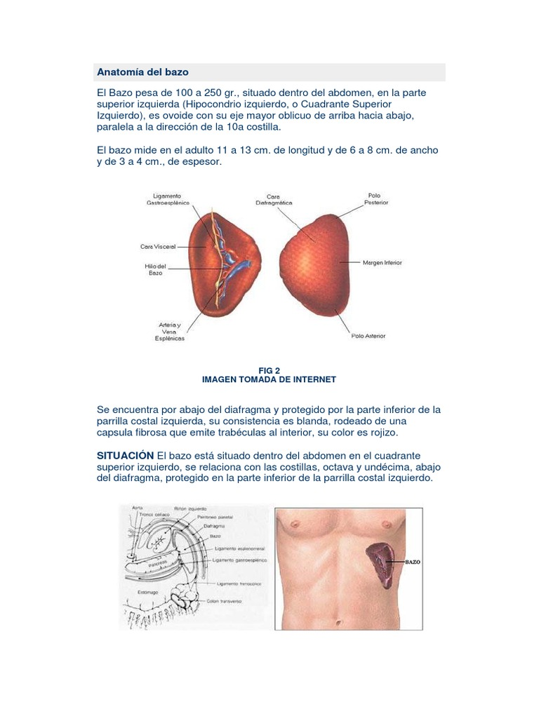 Contemporáneo Celíaca Eje Anatomía Imagen - Imágenes de Anatomía ...
