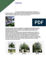 Despre Arborele Paulownia
