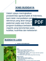 Budidaya Lada