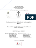Zegeye Thesis Final (Mechanism of action of Doc from bacteriophage P1)