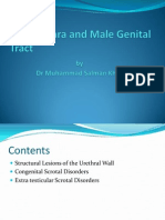 The Urethra and Male Genital Tract