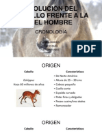 EVOLUCIÓN DEL CABALLO FRENTE A LA DEL HOMBRE