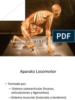 Anatomia de La Locomocion 2014