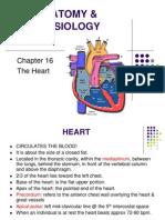 AP Chapter 16B