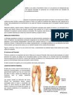Correlaciones clínicas de fémur