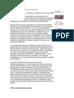 Procesos biológicos de oxido reducción.docx