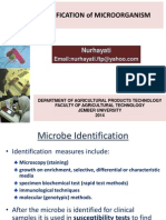 Identification of Mcroorg TEK BIO 2