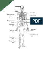 Jenis Tulang