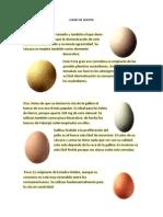Clases de Huevos