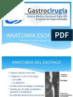 Anatomia Esofagica