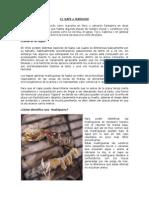 EL NAPE o MARUCHA.pdf