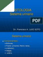 histologia delsist-urinario