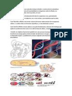 Blaise pascal y las ciencias naturales incluyen el diseño y construcción de calculadoras mecánicas