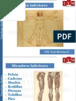 Sesion III- Anatomía Radiológica Sistema musculo esquelético I. Cadera, pelvis y EEII.pdf