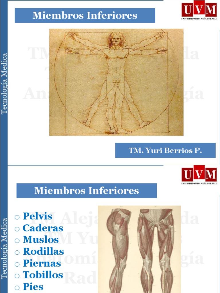 Sesion III- Anatomía Radiológica Sistema musculo esquelético I ...