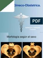 Pelvis Obstetrica