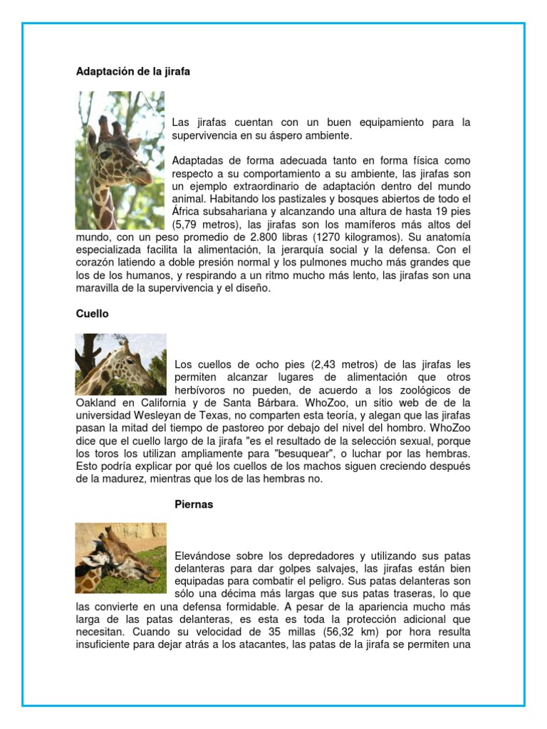 Adaptaci n de la jirafa for Caracteristicas de una habitacion