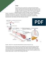 Patofisiologi Sepsis