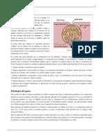 Gusto.pdf-4