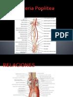 Arteria Poplitea