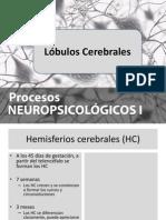 lobulos cerebrales2