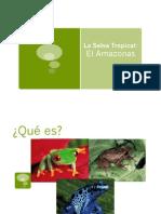 Los animales de la Amazonia