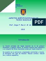 Medicina01MúscEsqICBMII2013
