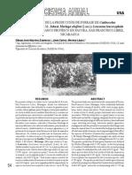 Biomasa Sca y Verde Calculo