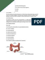 Anatomia i.g