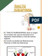 Tracto Rubroespinal
