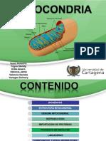 Diapos_Mitocondria