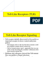 TLR Lecture.ppt