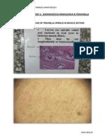 141728681 Practical Parasitology 1
