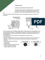 20. Procesado de la información visual.docx