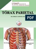 Clese Torax Parietal