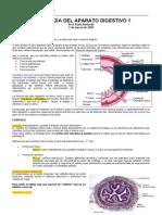 01. Histologia AP. Digestivo 1 - 02 de Marzo
