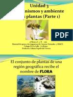 Ppt Las Plantas 2
