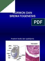 HORMON DAN SPERMATOGENESIS