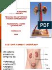 Exposicion Sistema Renal