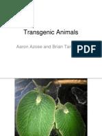 honors 396 spring - transgenic animals pptx