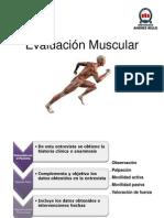 Clase 10 y 11- Evaluacion Muscular