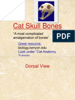 Cat Skull Bones Ppt